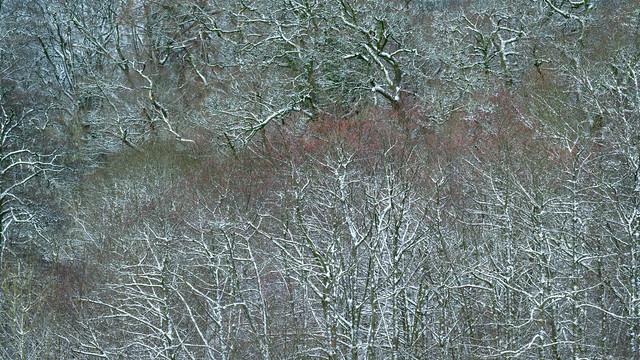 Midwinter Of The Spirit | Auchterarder | Perthshire