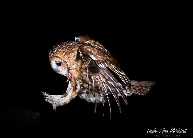 Hop, Skip, Jump.....