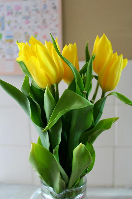 The yellow tulips...