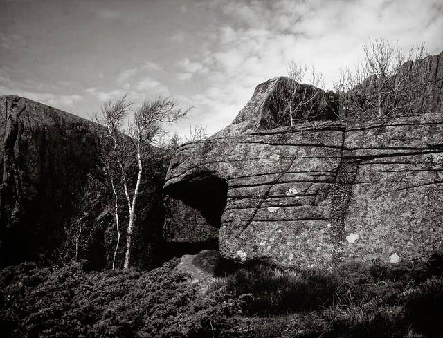 Rocks and birch - paper negative