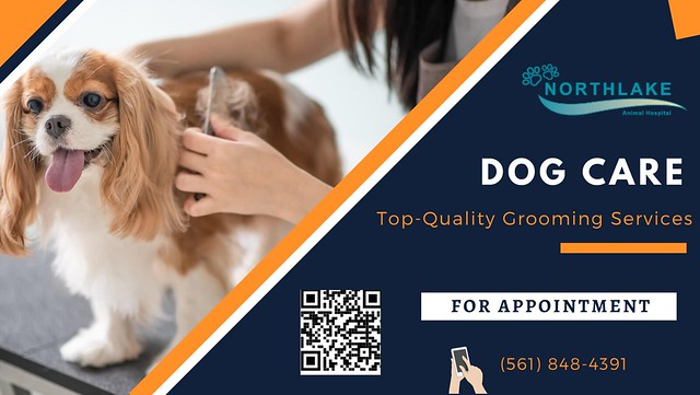 Get Great Health Check-up for your Pet