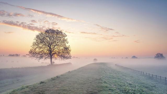 The Misty Meadow