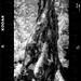 Tree of Stars 05060110
