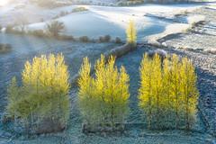 A Frosty Tree Line