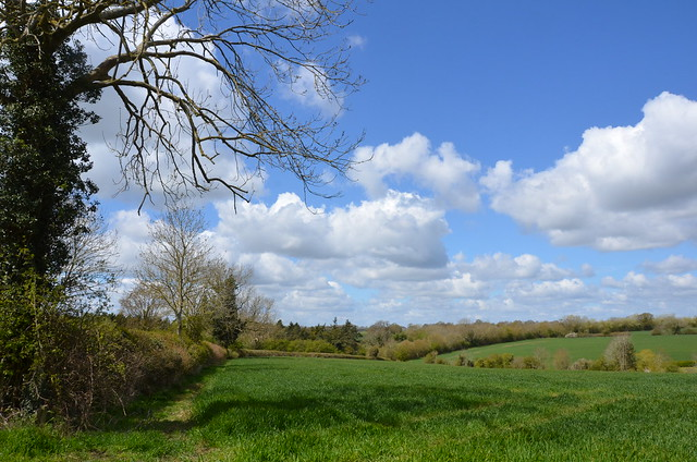 South Norfolk countryside