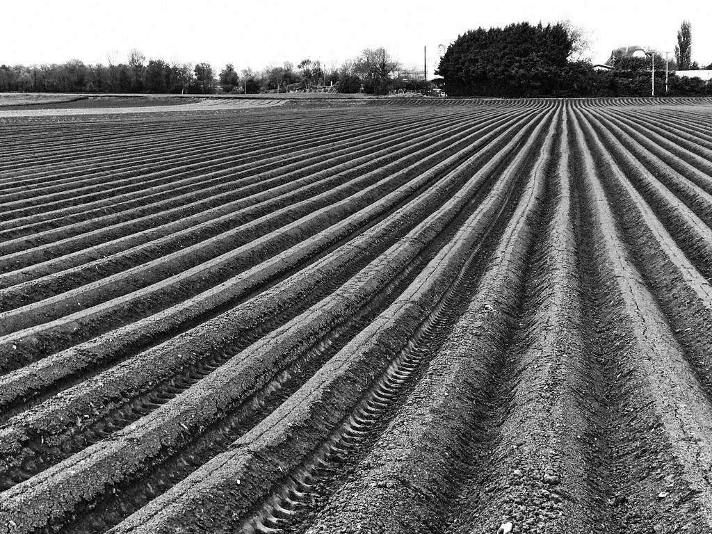 Promenade dans les champs en Alsace, près de Strasbourg. 1