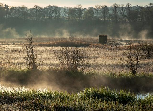 Misty, RSPB, Lochwinnoch, Renfrewshire, Scotland UK