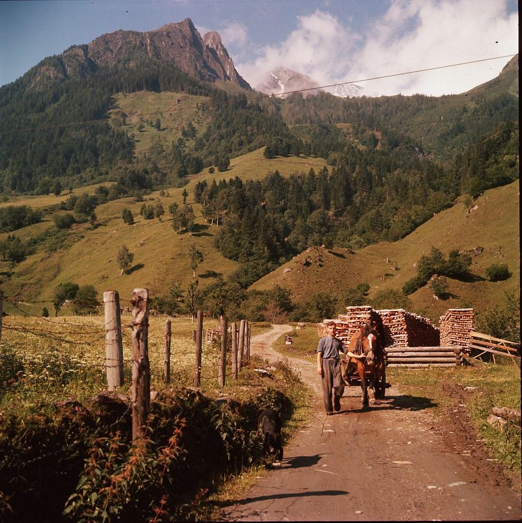 47. Мужчина ведет лошадь по тропе в горном районе Каринтии