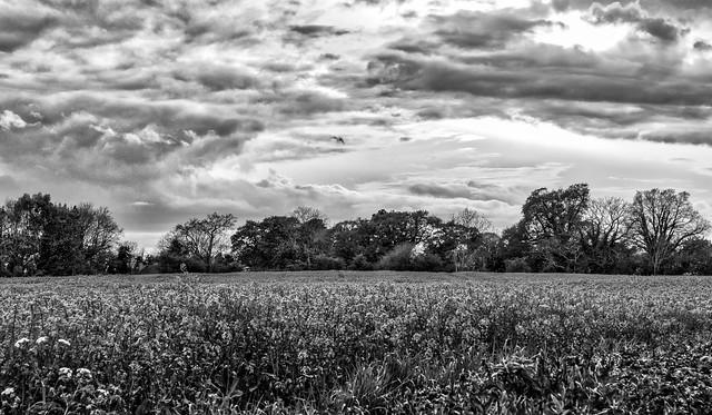 Field in Mono