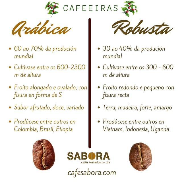 Cafeeira de arábica fronte a cafeeira de robusta