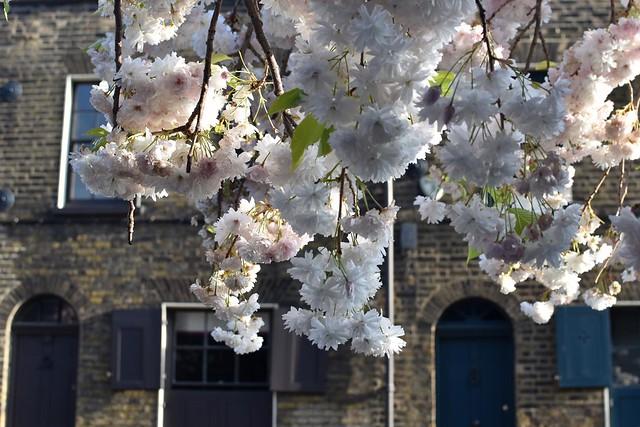 2021-04-21: Pretty Whitechapel