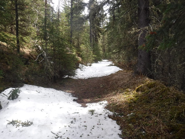 Sprig trails In Alberta