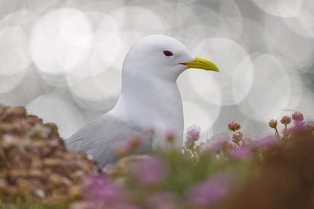 Bird in Bokeh