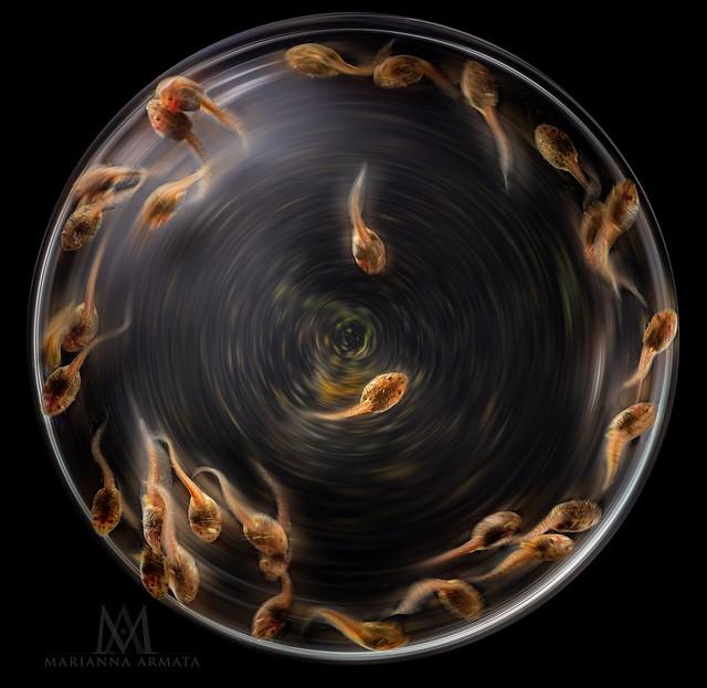 tadpole soup
