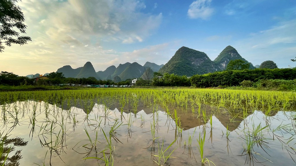 Sunset over Yangshuo ricefields