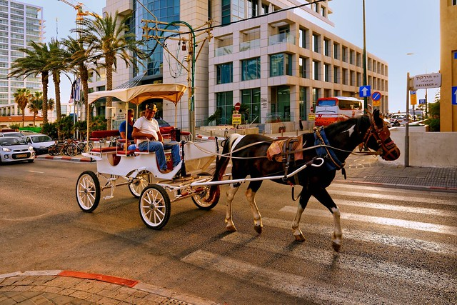 Tel-Aviv / Hayarkon ST. /  Tourist horse-drawn carriage