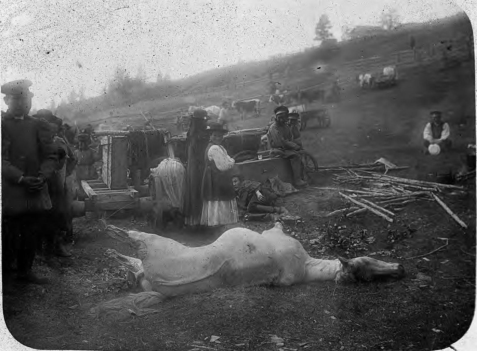 Туша забитого коня