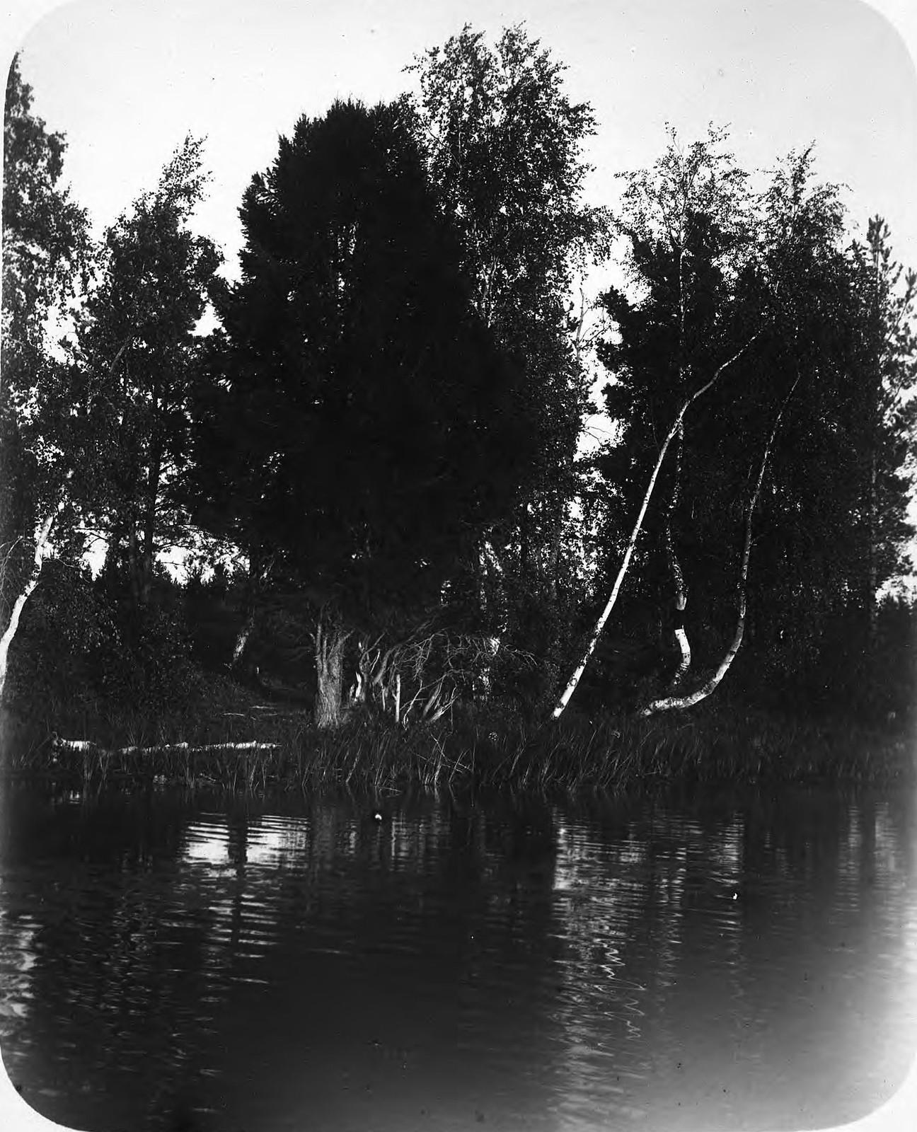 Лес на берегу реки