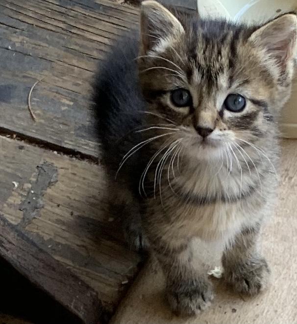 Cute kitten- re-do