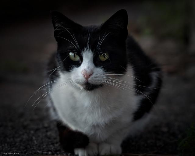 Street Cat... Lovely eyes
