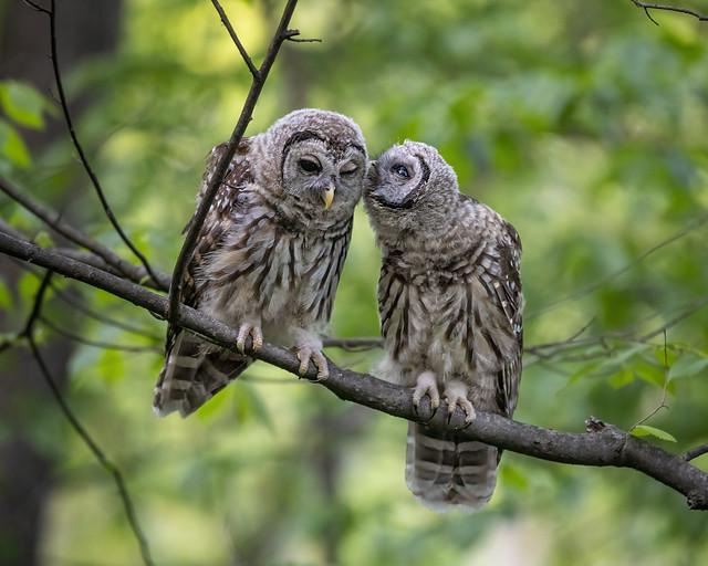 Whispering Secrets...