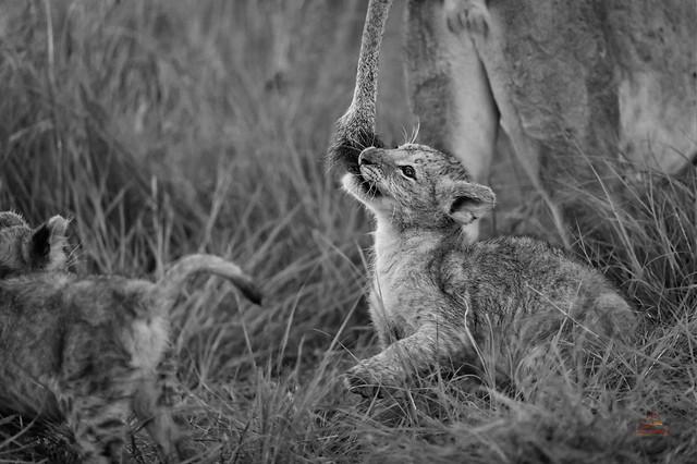 Playtime at the Kill