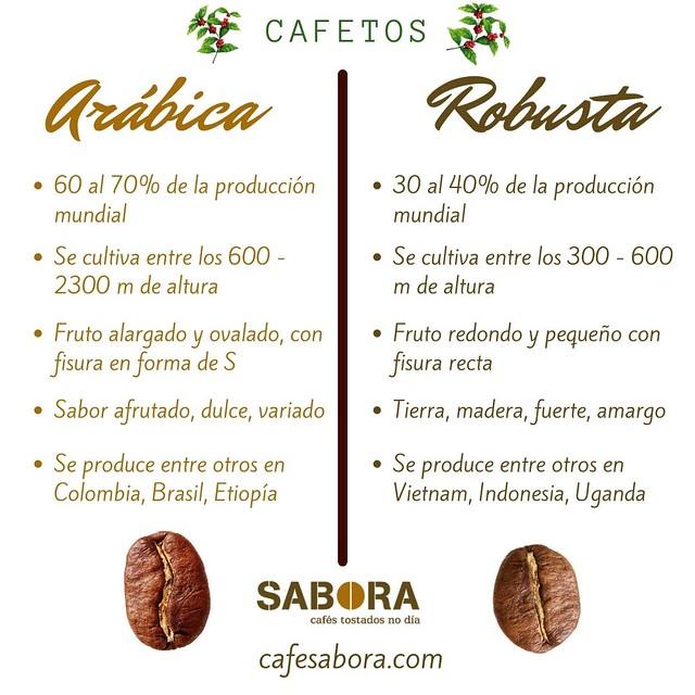 Cafetos de Arábica frente a cafetos de robusta