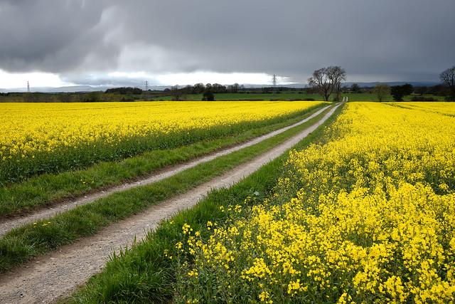Blanket of Yellow.
