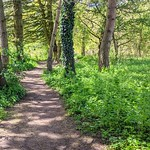 Walk in the woods at Haslam Park