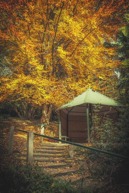 Picture of Autumn, Explored