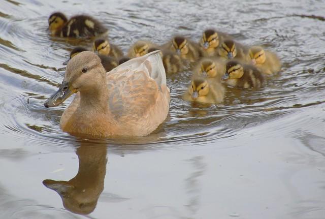 Mum with big family
