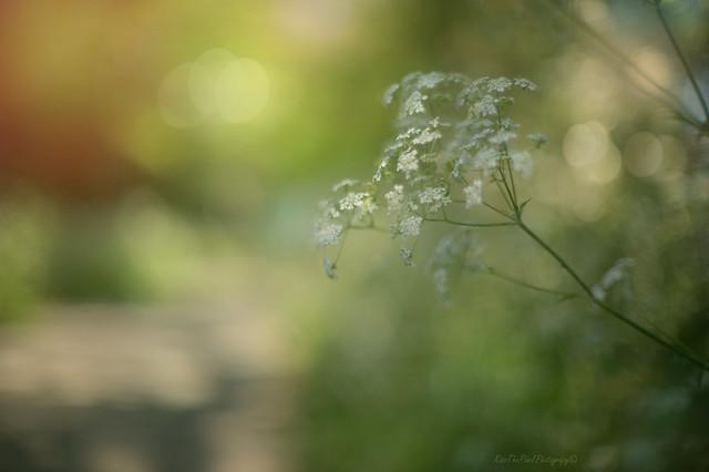 Spring Light...