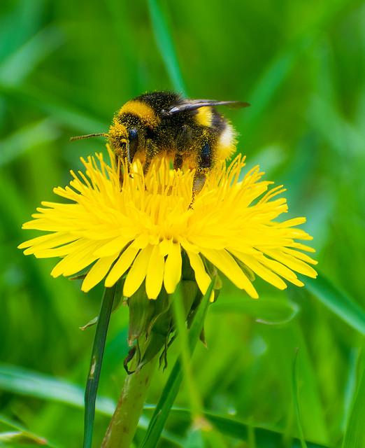 hardworking bumblebee 🌸
