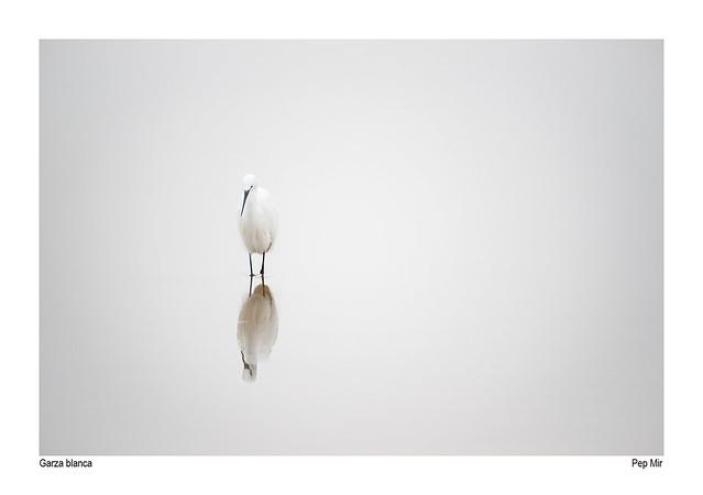 Garza blanca-2366