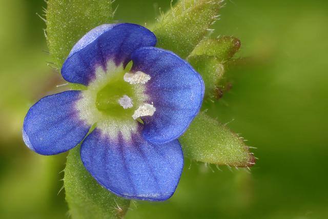 flower in blue...