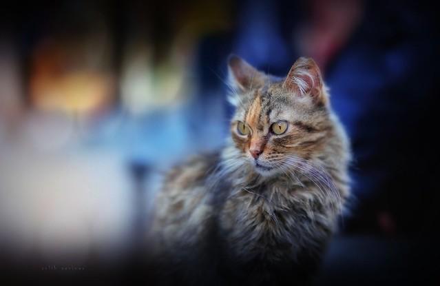 night cat..