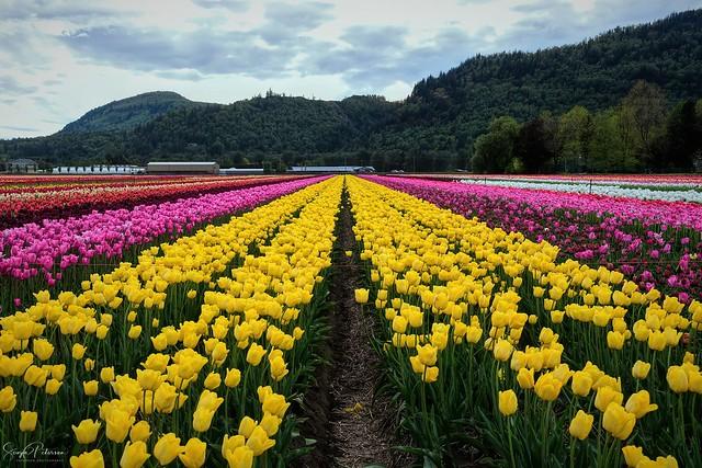 Lakeland Flowers - Abbotsford