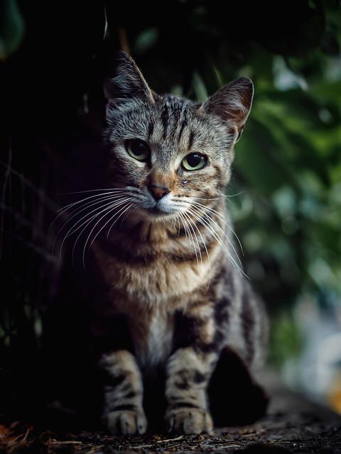 Street Cat .... Beautiful Face