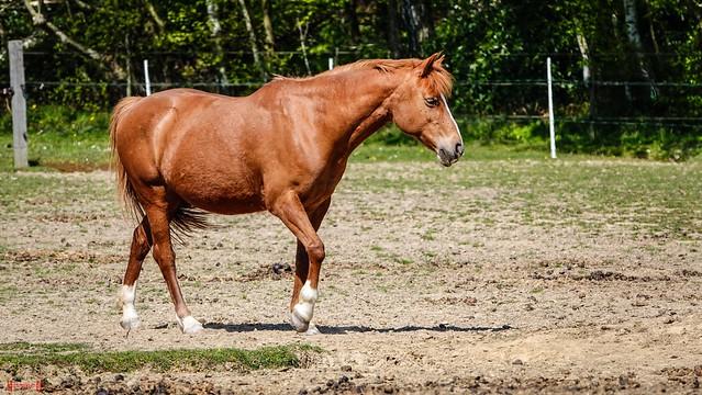 9710 - Horse