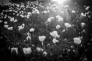 PFE-Spring-00130