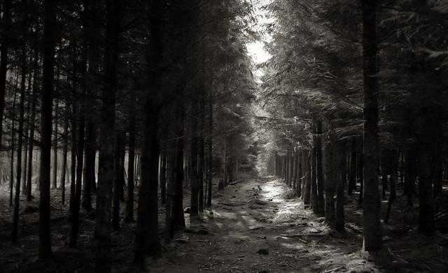 Backlight woodlane