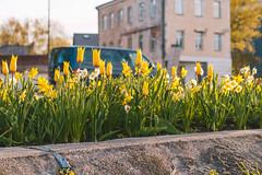 City flowers | Kaunas aerial