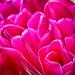 Flower--3.jpg