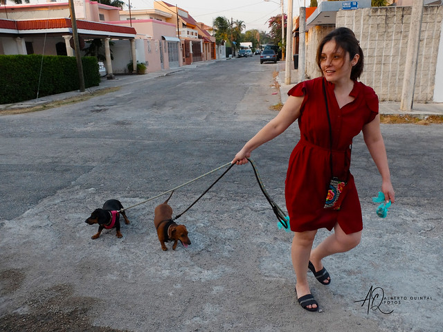 Walking the dogs??