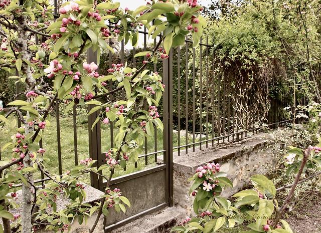 HFF! Spring & fence