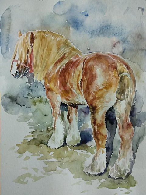Watercolor draft horse.