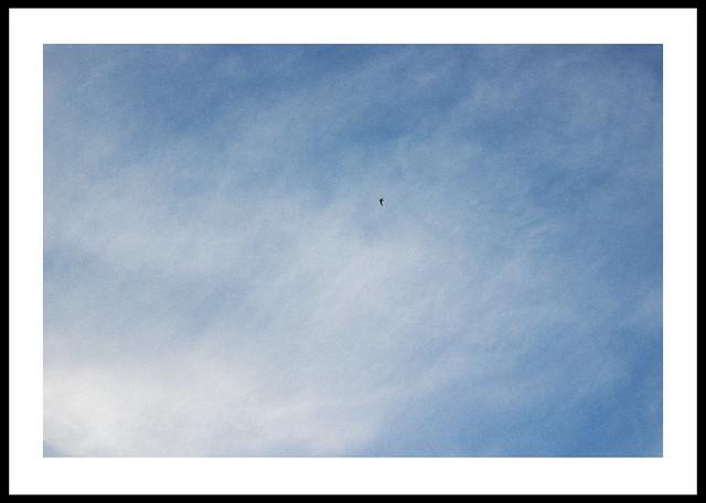 flying spot
