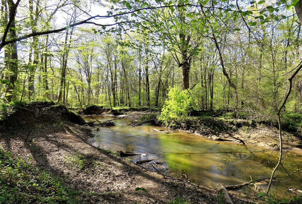 Along a Forested River