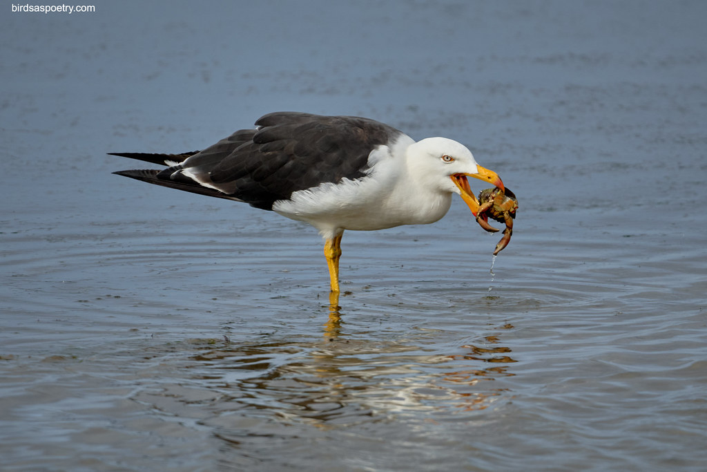 Pacific Gull: Gourmet Dining