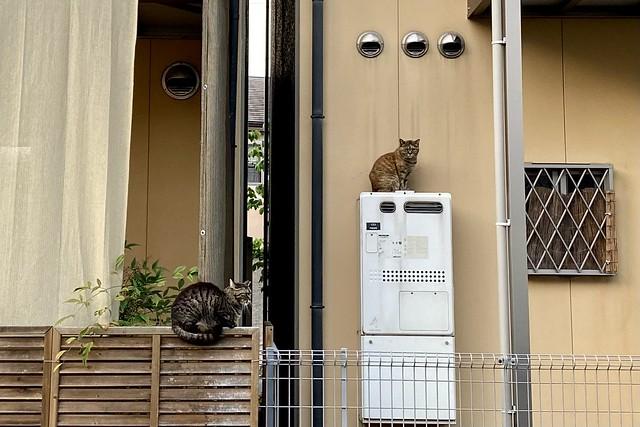 Today's Cat@2021−05−07